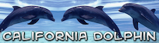 California Dolphin - diving for California News